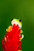 FRG 01 JZ0020 01