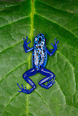 FRG 01 JZ0021 01