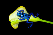 FRG 01 JZ0022 01