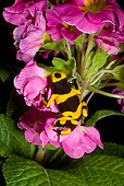 FRG 01 JZ0023 01