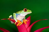 FRG 01 JZ0029 01