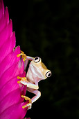 FRG 01 JZ0032 01