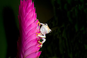 FRG 01 JZ0033 01