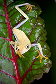 FRG 01 JZ0034 01