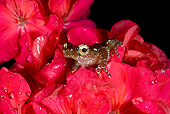 FRG 01 JZ0035 01