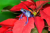 FRG 01 JZ0036 01