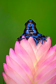 FRG 01 JZ0037 01