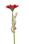 FRG 01 KH0018 01