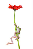 FRG 01 KH0020 01