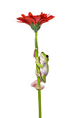 FRG 01 KH0022 01