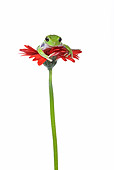 FRG 01 KH0023 01