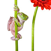 FRG 01 KH0025 01