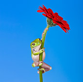 FRG 01 KH0027 01