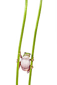 FRG 01 KH0030 01