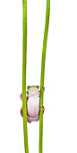 FRG 01 KH0031 01