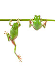 FRG 01 KH0033 01