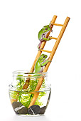FRG 01 KH0035 01