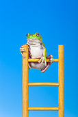 FRG 01 KH0041 01