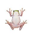 FRG 01 KH0046 01