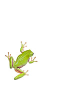 FRG 01 KH0047 01
