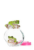 FRG 01 KH0050 01