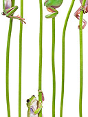 FRG 01 KH0054 01