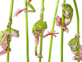 FRG 01 KH0055 01
