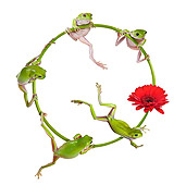 FRG 01 KH0058 01