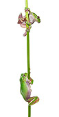 FRG 01 KH0061 01
