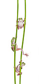 FRG 01 KH0063 01