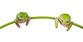 FRG 01 KH0066 01