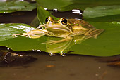 FRG 01 MC0003 01