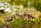 FRG 01 MC0004 01