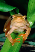 FRG 01 MH0007 01