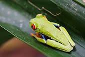 FRG 01 NE0001 01