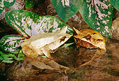 FRG 01 RK0058 01