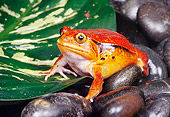 FRG 01 RK0062 04