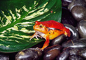 FRG 01 RK0062 06