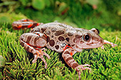 FRG 01 TK0053 01