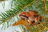 FRG 01 TK0054 01