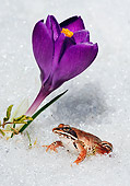 FRG 01 TK0055 01