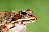 FRG 01 TK0057 01