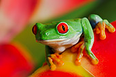 FRG 01 TK0063 01