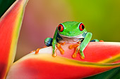 FRG 01 TK0064 01