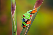FRG 01 TK0068 01