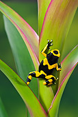 FRG 01 TK0072 01