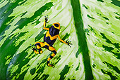 FRG 01 TK0073 01