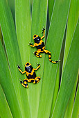 FRG 01 TK0077 01