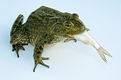 FRG 01 WF0001 01