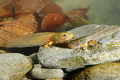 FRG 01 WF0006 01